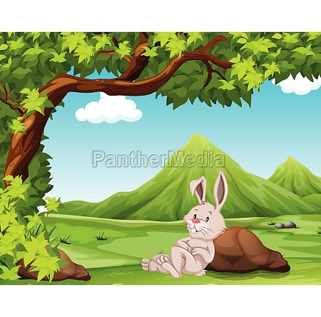 a rabbit in nature