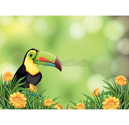 a toucan on nature background