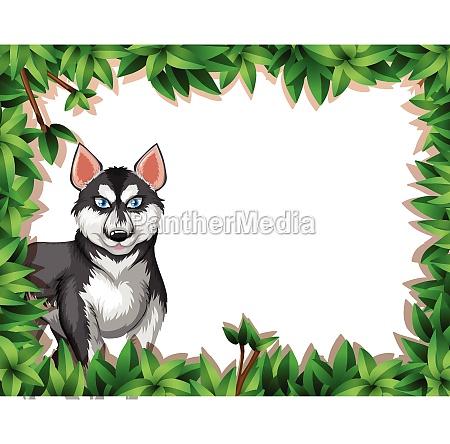 a husky on nature frame