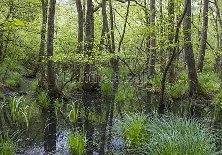 old rhine german countryside landscape