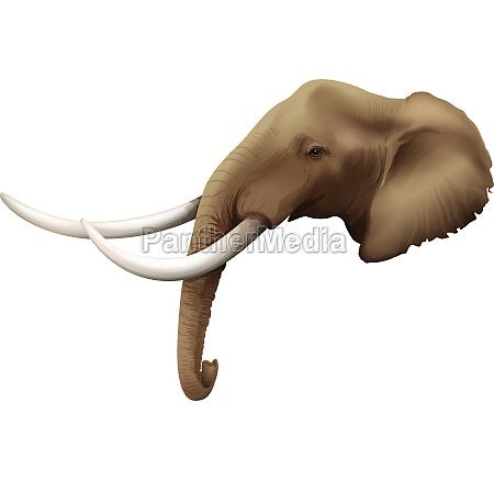 a head of an elephant
