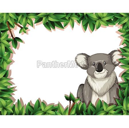 koala in nature background