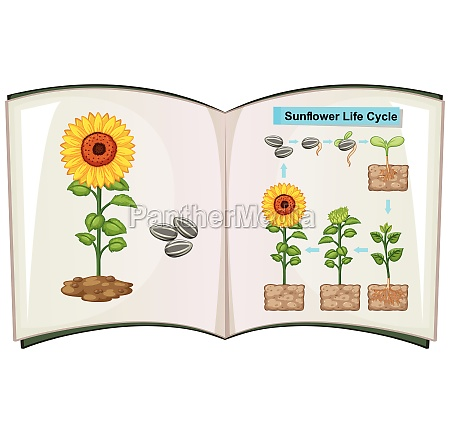 book showing diagram of sunflower life