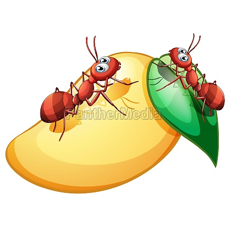 a mango with ants