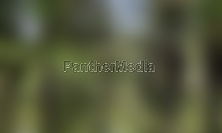 blurred blur background texture color