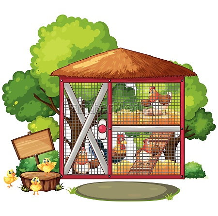 chickens in big coop