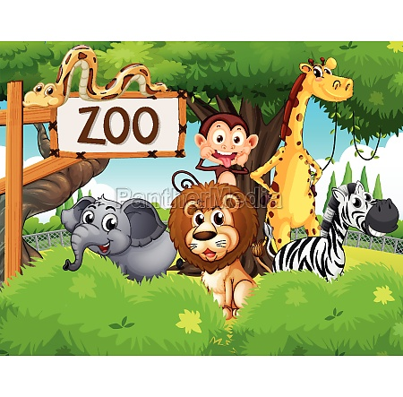 wild animals at the zoo