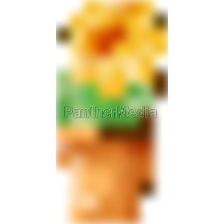 single flower in clay pot