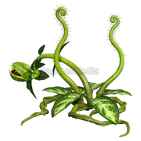 3d rendering carnivorous plant on white