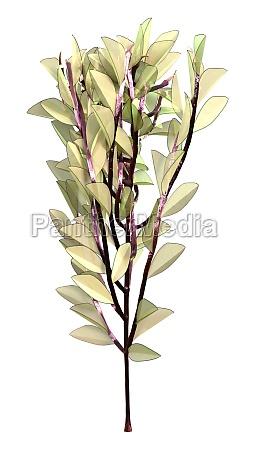 3d rendering alien plant on white