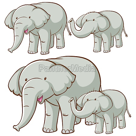 isolated picture of gray elephant