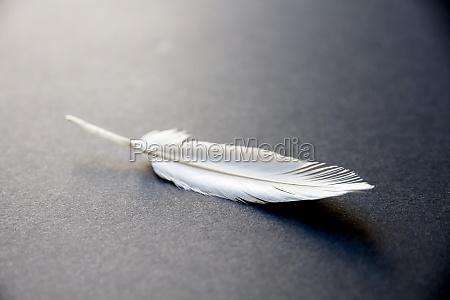 white feather on elegant background
