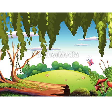 a nature forest background