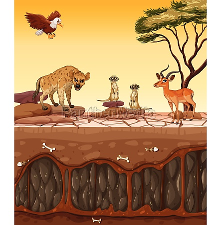 a dry land and wild animals