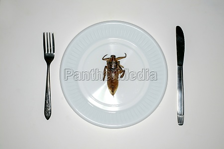 overhead view of insect in plate