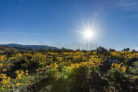 usa idaho boise sun shining above