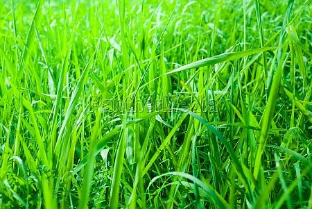 green fresh meadow background