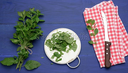 bunch of green mint on a