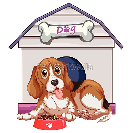 pet dog in front of doghome