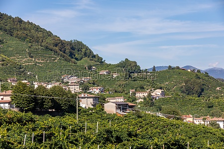 picturesque hills with vineyards of the
