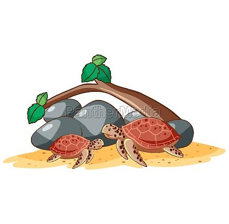 sea turtles on white background
