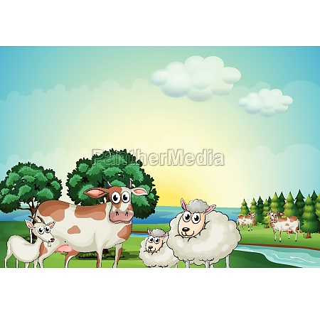 sheeps cow and goat near the