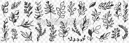 leaves natural pattern doodle set