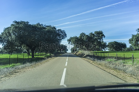 driving alone by oak tree forest