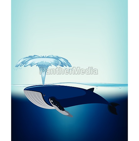 a whale under the water