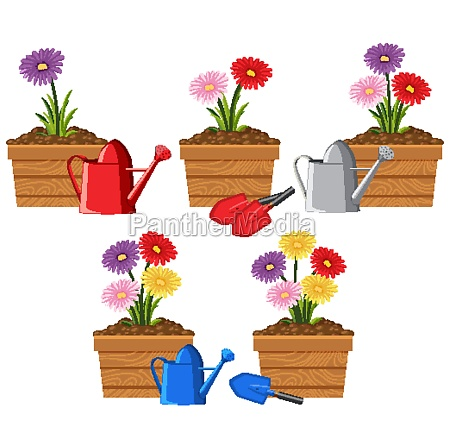 colorful flowers in wooden containers