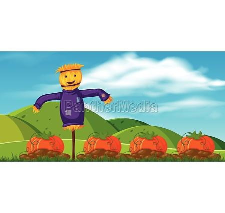 funny scarecrow in pumpkin farm
