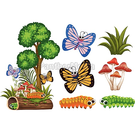 butterflies and caterpillars in garden