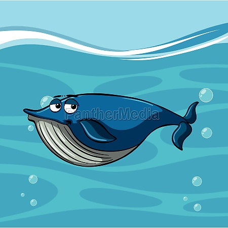 blue whale swims under the sea