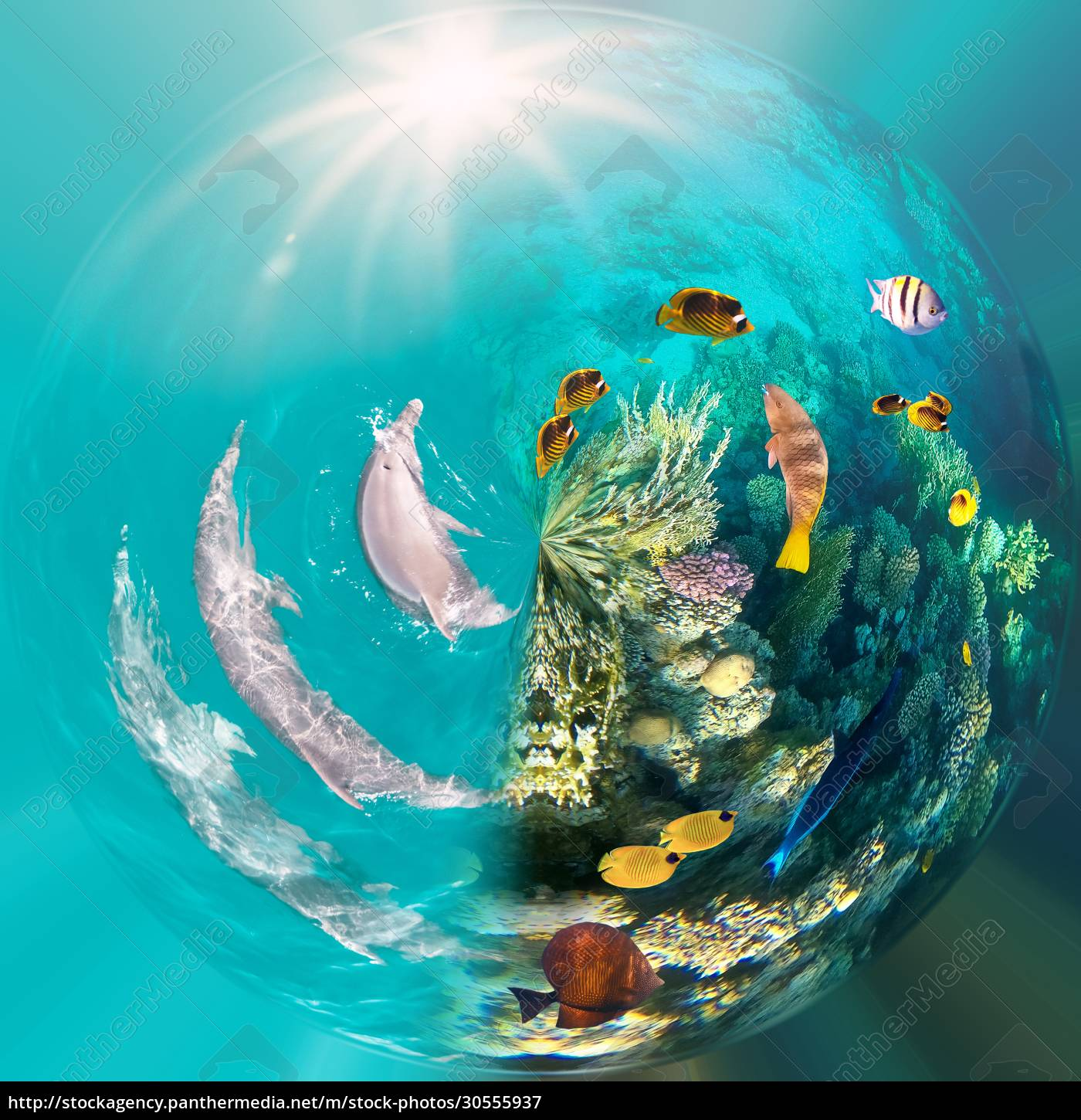 underwater, scene, with, dolphins, and, colorful - 30555937