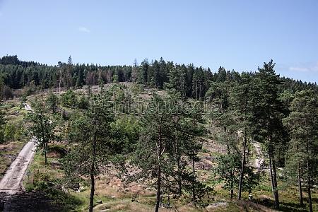 damaged coniferous forest