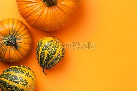 autumn decorative pumpkins background with copy
