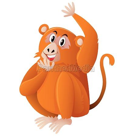 wild monkey on white background