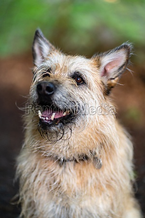 cute mixed breed dog with beautiful