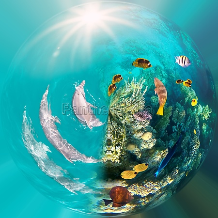 underwater scene with dolphins and colorful