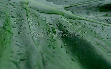 close up rain drops on green