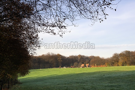 view on a field near the