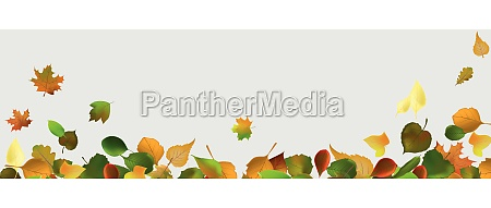 leaf autumn vector realistic background nature