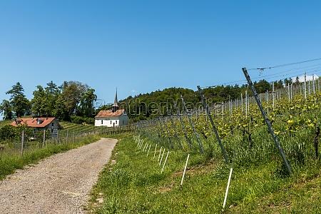 small chapel in vineyard st gallus