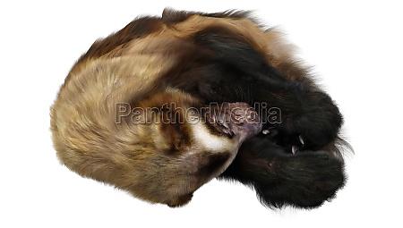 3d rendering wolverine on white