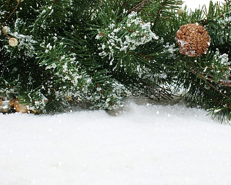 christmas tree branches in snow