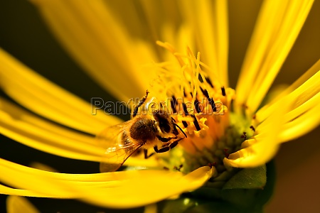 bee on yellow flower in a