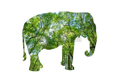 world wildlife day forest silhouette in