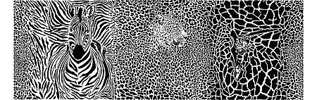 background with leopard giraffe and zebra