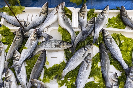 fish market stall in the city