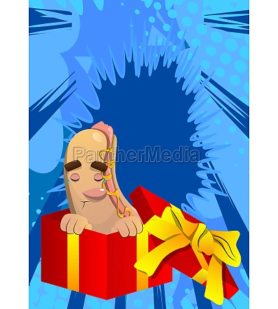 hot dog in a gift box